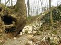 Obnažené kořeny krátce po spodní části sanaci rokle